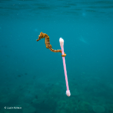 Sewage surfer © Justin Hofman - Wildlife Photographer of the Year